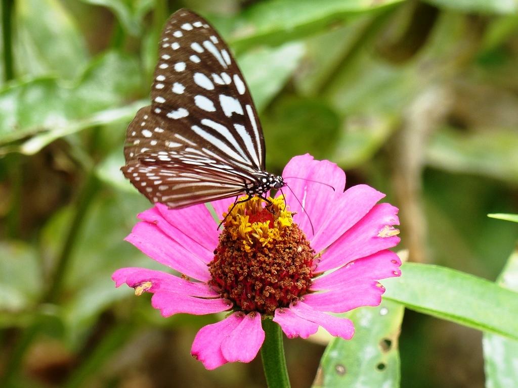Vietnam delta Mékong fleuve eaux bateaux VenSông Lodge guesthouse fleurs papillons nature végétation Le delta du Mékong est peuplé de fleurs et de papillons