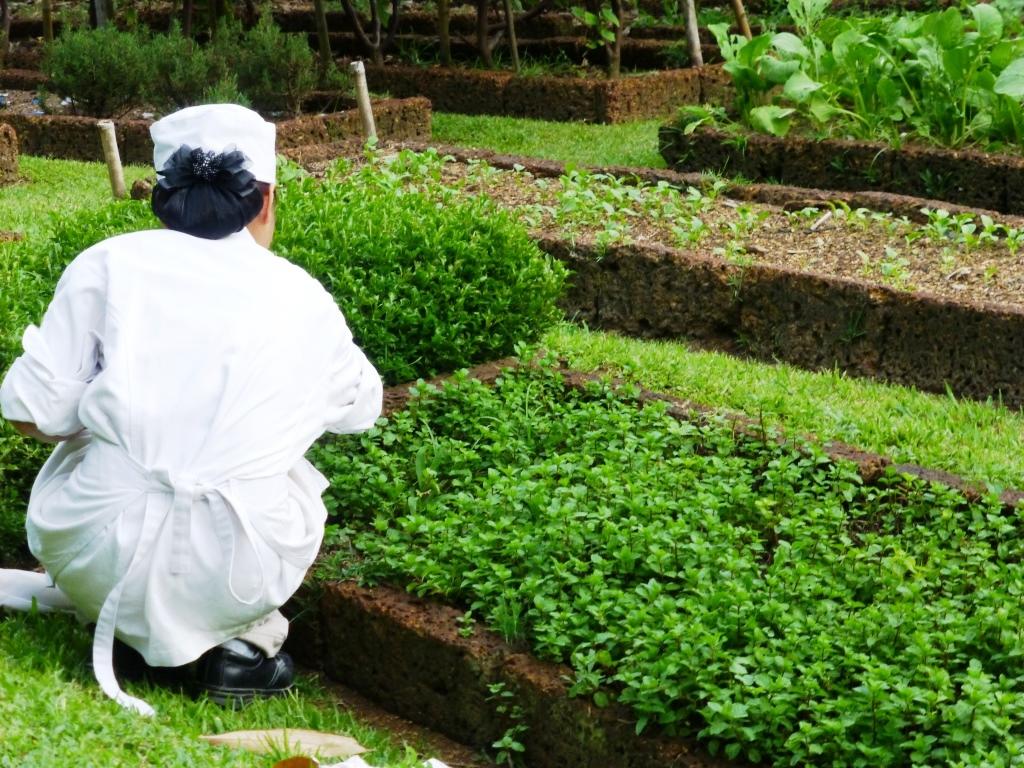 Bestglobe la salade som tam tha landaise - Les produits menagers utilises dans le jardin ...