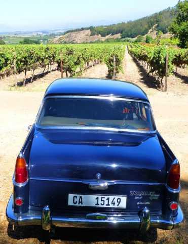 Ballade en voiture ancienne (ici une Wolseley) dans les vignobles de la région de Stellenbosch