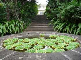 Réunion Conservatoire national Mascarin L'entrée forestière du jardin botanique