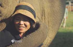 """""""La maman des éléphants"""" en Thaïlande présentée dans """"Faut pas rêver"""""""