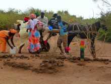 """Sénégal Sahel boeufs vaches djakoré sable poussière carriole Une """"sarret"""" (carriole) de transport collectif"""