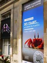 L'exposition sur les crabes au Museum du Jardin des plantes de Paris