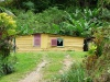 Des maisonnette enfouies dans la végétation (tribu Napoémien, Poindimié, Nouvelle Calédonie)